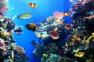 דגים לאקווריום